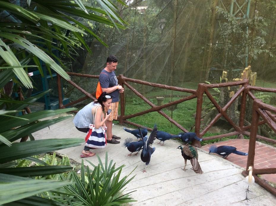 2017-05-29 13:36:38: Парк птиц в Куала лумпуре