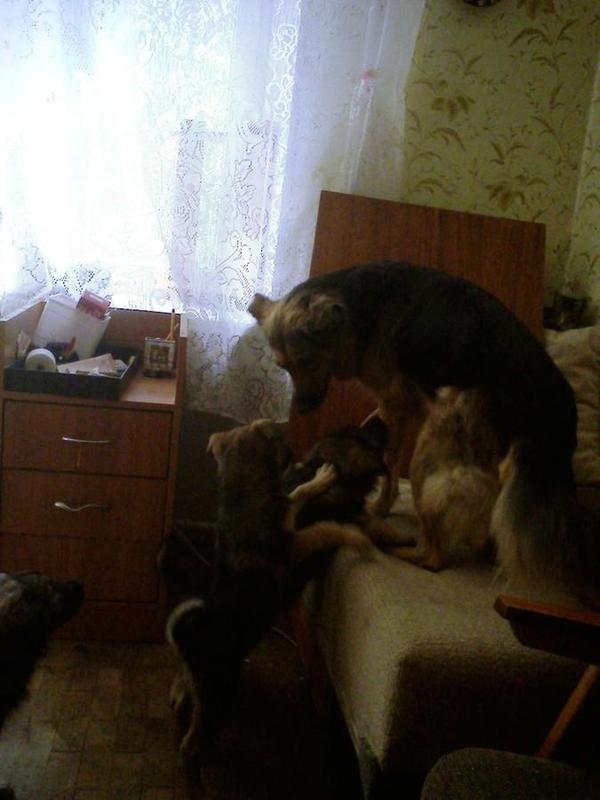 2018-04-21 06:43:29: маманя..кто не заметил (!) - в углу  кот который до щенков был у собаки любимцем