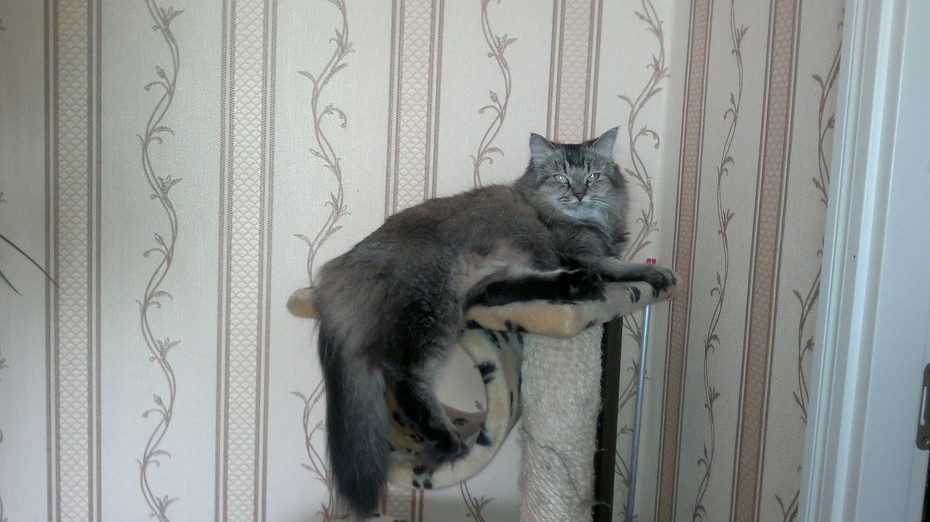 2014-09-20 19:55:29: кошка Васи Косякова (сказали, что суровая)))